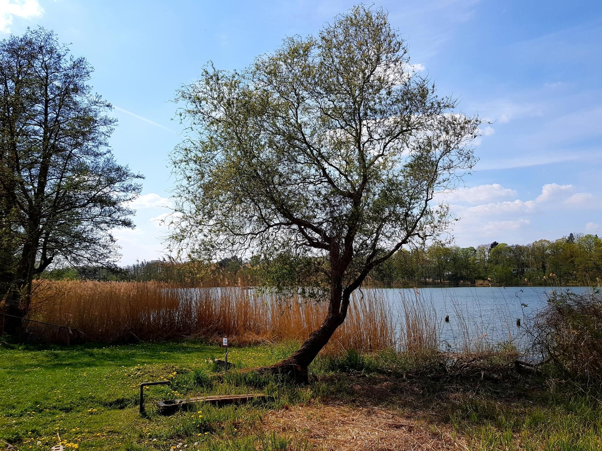 66-Seen-Wanderweg an der Quelle des Kleinen Stienitzsee