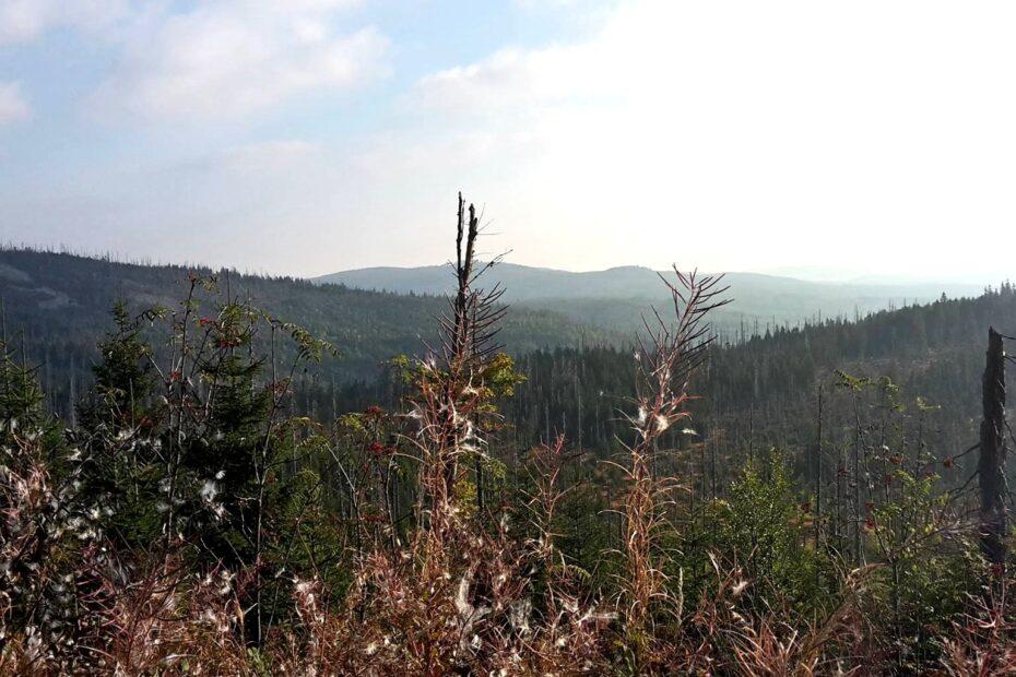 Bayerischer Wald Naturparadies zum Wandern