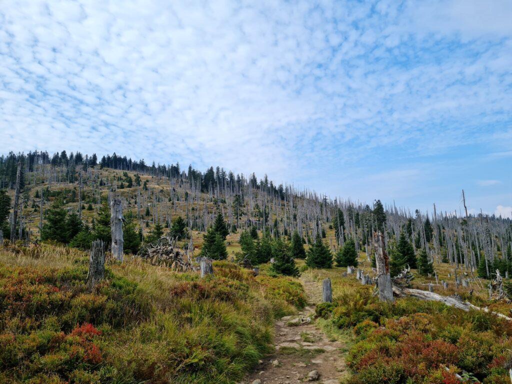 Gipfelrundtour Bayerischer Wald: Großer Rachel